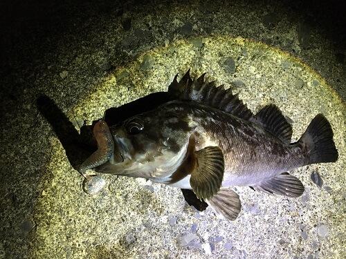 函館の下海岸で真面目にナイトロック!夜ヒラメも狙ったよ。8/8追記ヒラメが釣れたよ。