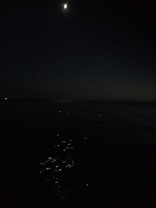 ヤリイカ夜釣り