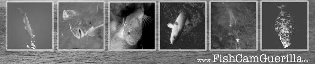 FishCam Guerilla