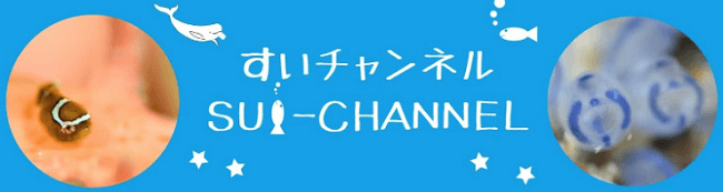 sui-channel