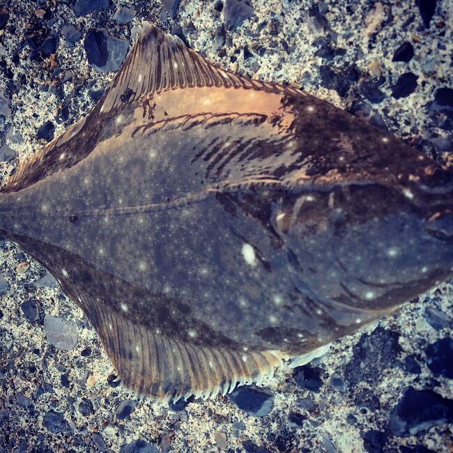 海に消えていった大好きなルアーさん達。癒しの投げ釣り日記。