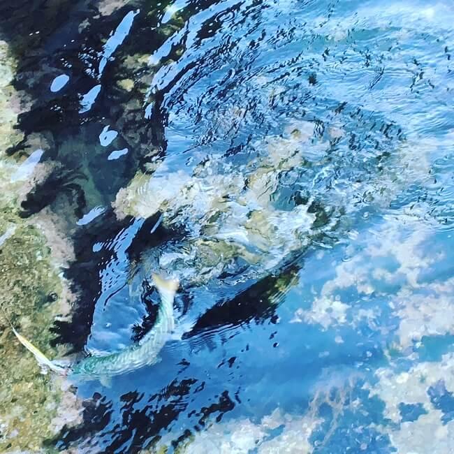 ヒラメ狙いは海のお宝探し!今年はテキサスリグとワームで根と地形変化を狙っていく。
