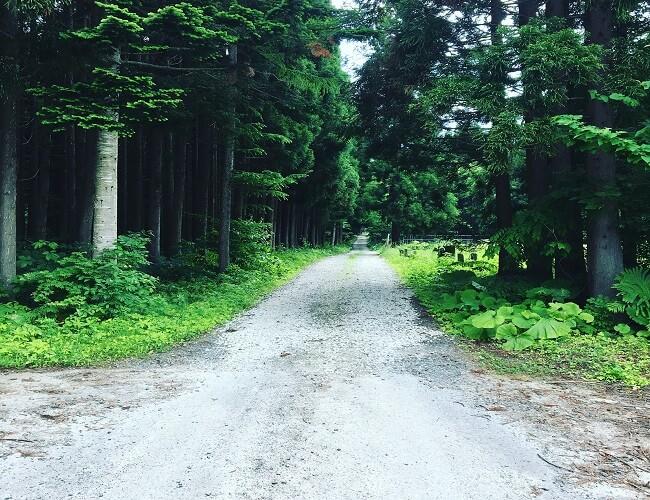 小谷石方面の林道