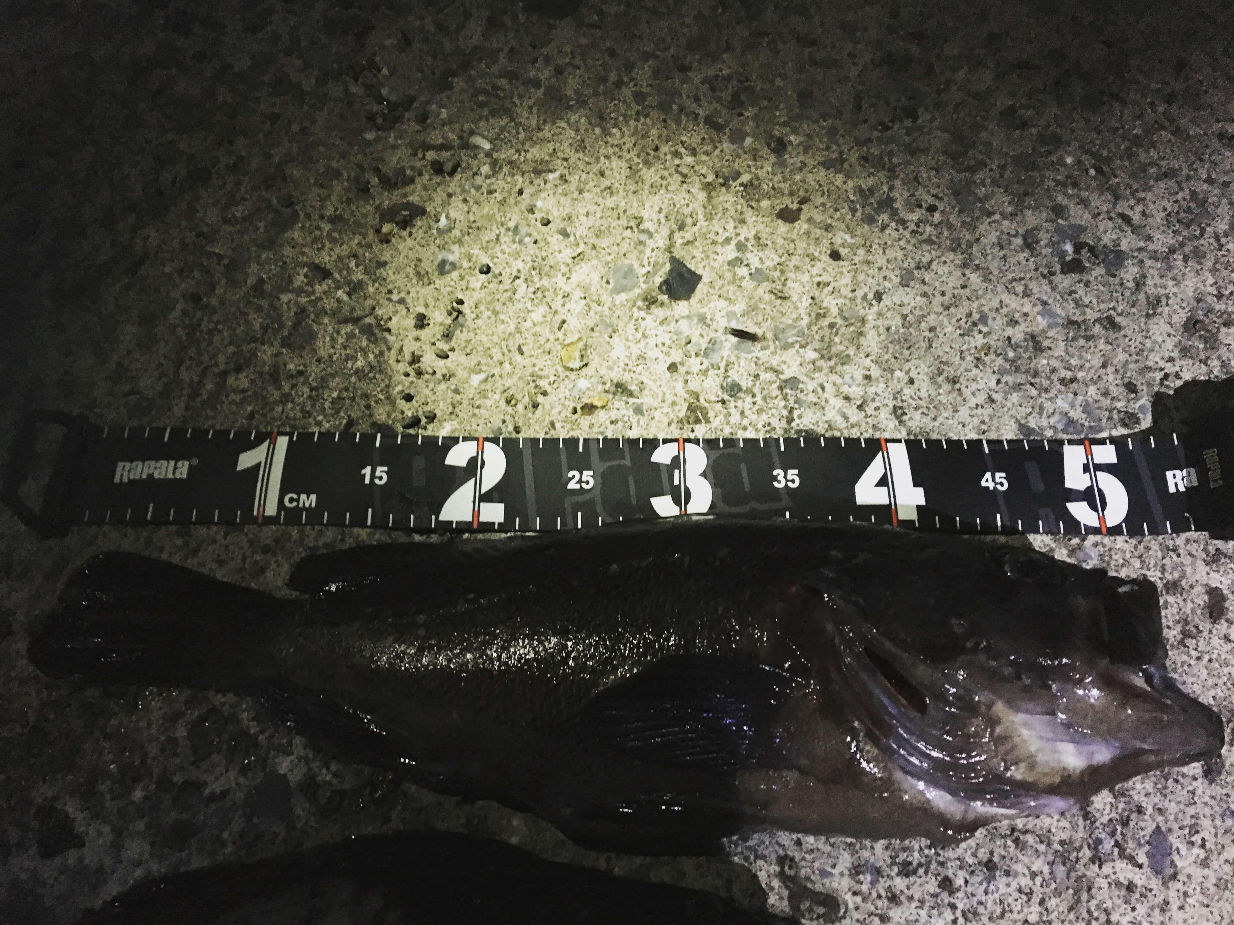函館の海は、サーフから50アップのクロソイが釣れる素晴らしい海です。