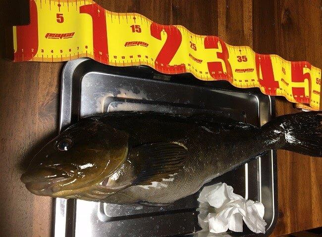 僕らが函館近郊のショアから釣っているお魚って通販だといくらくらいするんだろうか?
