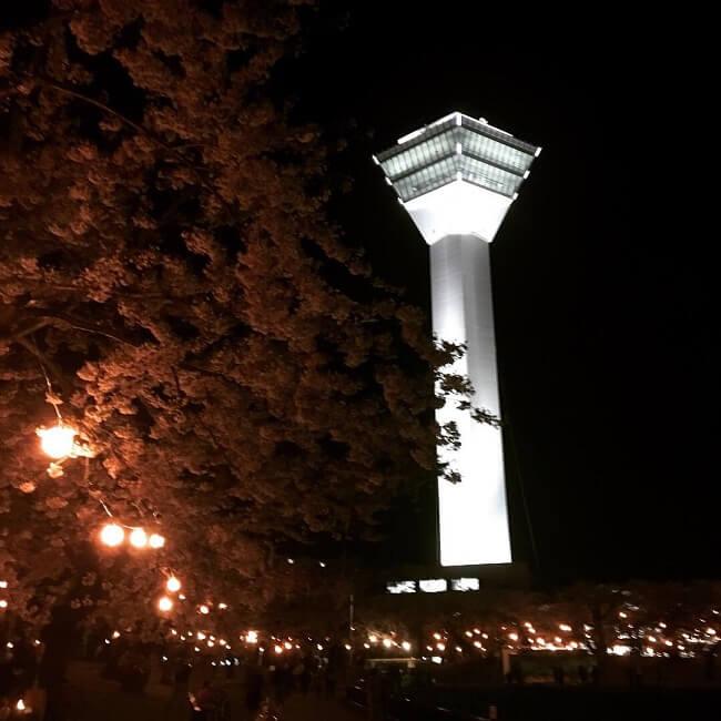 函館のGW。五稜郭のライトアップされた夜桜は、仮設トイレとジンギスカン風味。