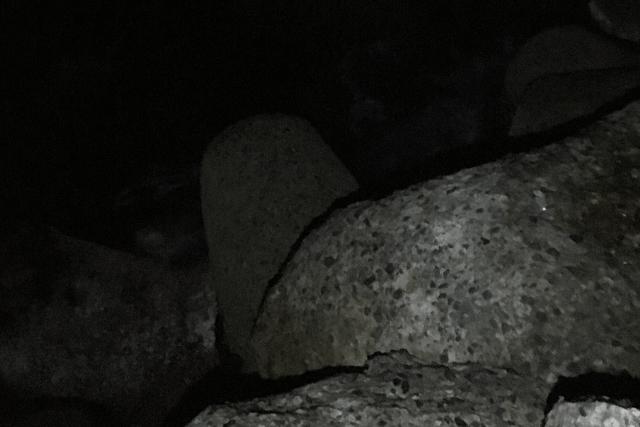 夜のテトラ