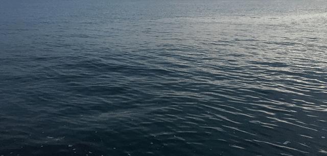 綺麗な水面