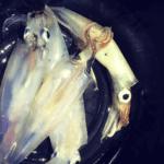 2021年!堤防や漁港からヤリイカを狙うウキ釣りのやり方!注意点や必要な道具など