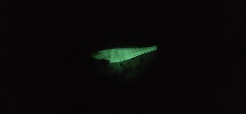 発光する餌巻きエギ