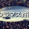 6/01 2020年サクラマス釣行記スタート!やっぱり熱が冷めたので【終漁】