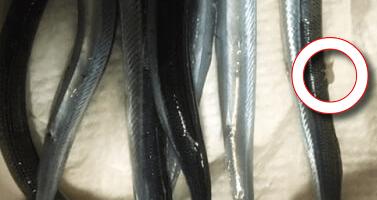 サヨリの寄生虫