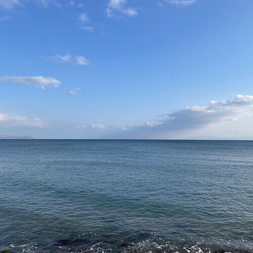 大森浜のサクラマス