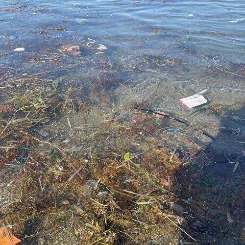 海藻だらけの海