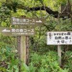 函館山の綺麗な登山道を登って昼の景色を楽しむ